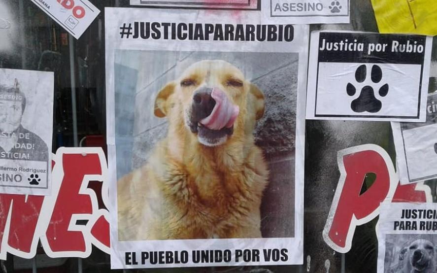 Proteccionistas piden justicia por Rubio, el perro salvajemente asesinado en Mar del Tuyú